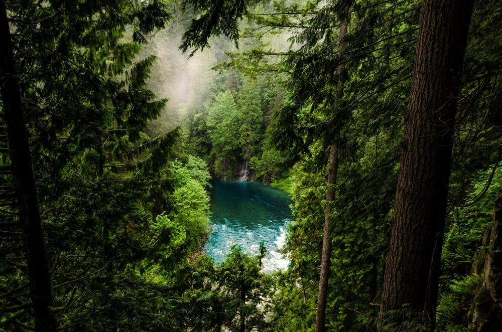 Skoventereprise kan bestå af mange elementer