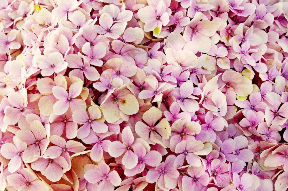 Køb dine blomster i den helt rigtige blomsterbutik